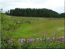 NY8693 : Pasture with small burn by Christine Johnstone