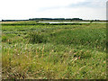 TL7186 : View across the washland at Lakenheath Fen by Evelyn Simak