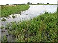 TL7086 : Washland in Lakenheath Fen by Evelyn Simak