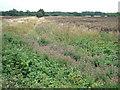 TF6725 : Day Common near Castle Rising, Norfolk by Richard Humphrey