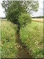 SE6077 : Dike - off private driveway to Ambleforth Abbey by Betty Longbottom