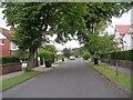 SE3846 : The Avenue - Linton Road by Betty Longbottom