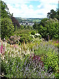 SX4268 : Terraced garden at Cotehele by Rod Allday