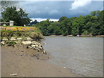 SX4268 : The River Tamar at Cotehele Quay by Rod Allday