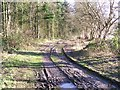 SU9593 : Bridleway in Owlsears Wood by michael