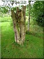 NY4043 : Wooden figures, High Head Sculpture Valley by Oliver Dixon