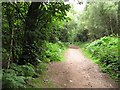 SJ5369 : Path, Delamere Forest by Richard Webb