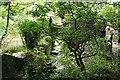 SX0789 : Tintagel: the ruins of Trewethett Mill by Martin Bodman