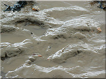 ST4071 : A closer look at Bristol Channel mud and seaweed, Clevedon by Brian Robert Marshall