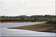 SK8166 : River Trent by Richard Croft