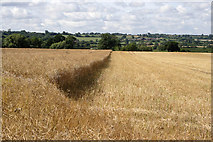 SK7528 : Late summer farmland by Kate Jewell