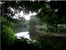 NS6859 : River Clyde at Bothwell Castle by Stephen Sweeney