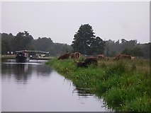 SU9947 : Highland cattle grazing near St Catherine's Lock near Guildford by Shazz