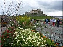 NU1341 : Lindisfarne Castle Gardens, Holy Island, Northumberland by Richard West