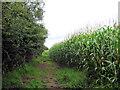SJ7964 : Footpath by the Maize crop (1) by Jonathan Kington