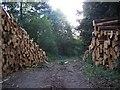SO4407 : Footpath Through The Wood by Geoff Pick