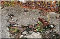 J3471 : Canal relics, Stranmillis, Belfast (3) by Albert Bridge