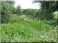 R6252 : Wet reedy roadside area by David Hawgood
