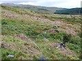 NR7367 : Hill path by Patrick Mackie