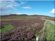 NH5639 : Moorland between Ladycairn and Altourie by Sarah McGuire