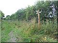 SJ8107 : Bridleway junction at Hobbal Grange by Row17