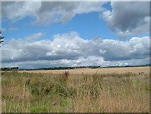 SU6517 : Field near Chidden by Margaret Sutton