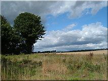 SU6517 : Copse next to field at Chidden by Margaret Sutton