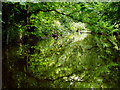 NZ4510 : River Leven in Hilton Wood by Graham Scarborough
