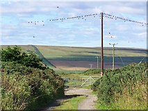 ND1463 : Birds on the wire, South Weydale by David Martin