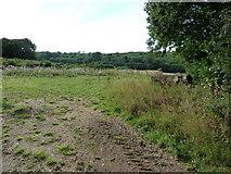 TR1958 : Field off Swanton Lane by Oast House Archive
