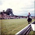 TQ3615 : The winner! Plumpton Racecourse by nick macneill