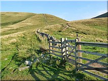NT8524 : Gate at Piper's Faulds by Oliver Dixon