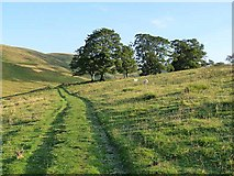 NT8525 : Old Halterburnhead by Oliver Dixon
