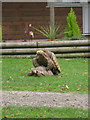 TR2558 : Tortoise at Wingham Wildlife Park by Oast House Archive