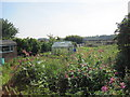 NZ2679 : Allotments, East Hartford by Les Hull