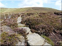 NT8819 : Pennine Way approaching Cairn Hill by Oliver Dixon