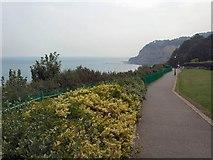 SZ5881 : Cliff Top Path - Shanklin by Paul Gillett