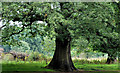J3369 : Tree, Lagan towpath, Belfast by Albert Bridge