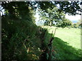 SJ2536 : Part of Offa's Dyke Path between the Ceiriog valley and Nanteris Wood by Jeremy Bolwell