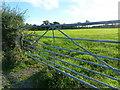 ST4794 : Evening sunshine at Mynydd-bach, Shirenewton by Ruth Sharville