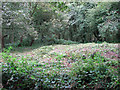 TG2410 : The site of St William's chapel in Mousehold Heath by Evelyn Simak