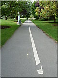 SU9850 : Cycle path within the Stag Hill campus by Basher Eyre