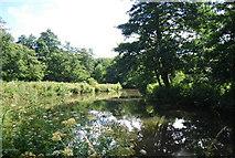 SU9948 : River Wey / Wey Navigation by N Chadwick