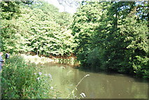 SU9948 : River Wey south of Guildford by N Chadwick