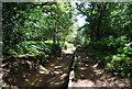 TQ0248 : Steps up to St Martha's Hill by N Chadwick