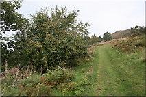 SO7641 : Crab apple tree by Bob Embleton