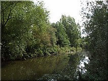TQ1579 : River Brent by Derek Harper