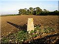 ST6765 : Ashton Hill trig point by Neil Owen