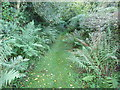 SO3480 : Part of the footpath through Clunton Coppice by Jeremy Bolwell