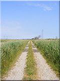 TM4599 : Farm track at edge of Haddiscoe Marshes by Glen Denny